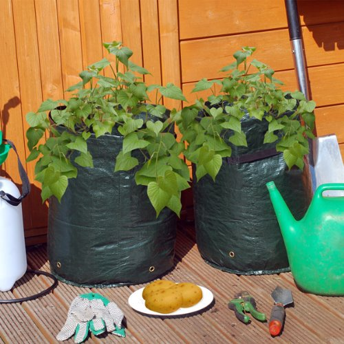 2 Potato Planter Grow Bags